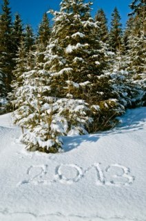 12202437-annee-2013-dans-la-foret-d-39-hiver